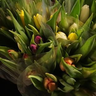 Tulpen-bos
