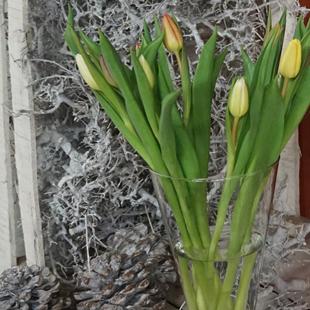 Tulpen-vaas